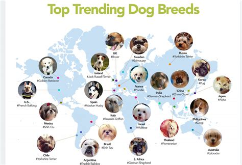 what is the most popular breed what are the most popular breeds worldwide