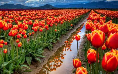 interesantes y bonitos fondos de escritorio de flores fondo pantalla bonito campo de flores