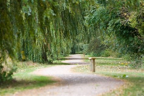 willows and path mural quot the willow tree path quot by hoodle hoo redbubble
