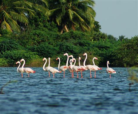 kumarakom bird sanctuary boating kumarakom information about kumarakom kumarakom beaches
