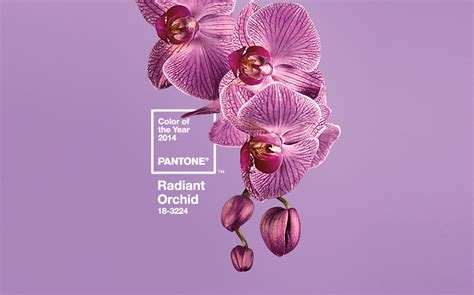 graphics radiant orchid pantone color   year