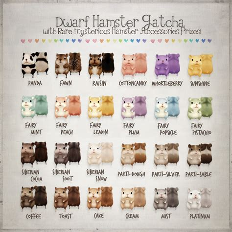 hamster colors hamster gacha color chart available at the arcade