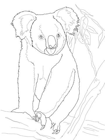 Koala Bear on a Tree coloring page | Free Printable