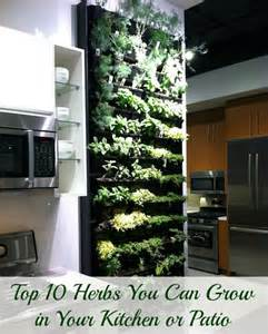 top 10 herbs you can grow in your kitchen or patio women