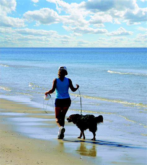 friendly florida beaches florida gulf coast beaches pet friendly
