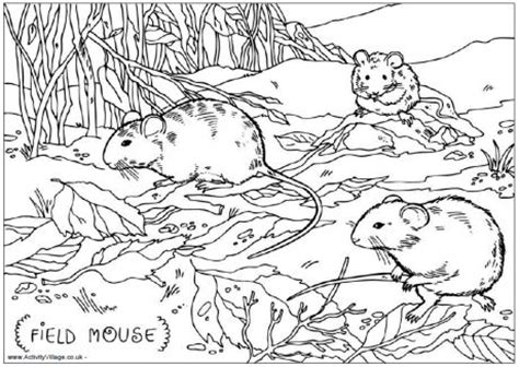 michigan wildlife a coloring field guide books field mouse colouring page for
