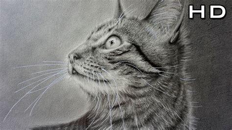 animales a lapiz youtube dibujo de un gato realista a l 225 piz dibujando a mi gata