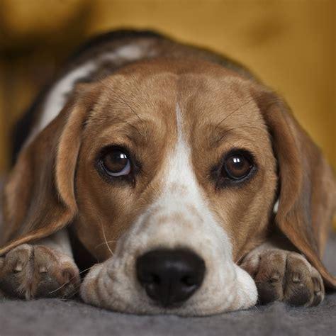 sad puppys image gallery saddog