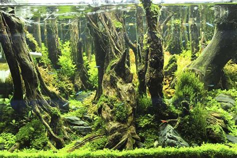 image gallery aquascaping encyclo fish