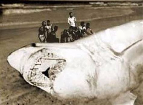 german u boats south africa 25 best ideas about megalodon evidence on pinterest