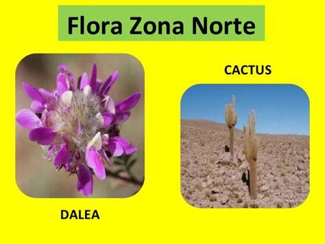 imagenes de flores de la zona norte ppt flora fauna y paisajes por zonas