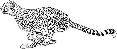 coloring page cheetah free cheetah coloring pages