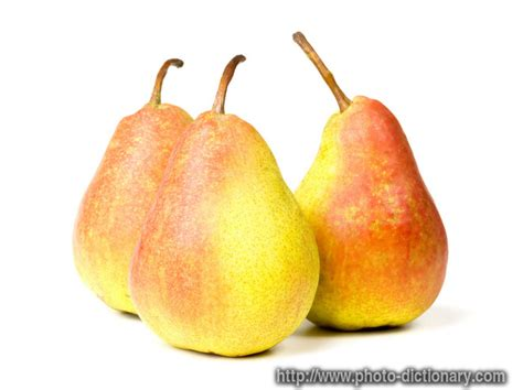 pears photopicture definition  photo dictionary