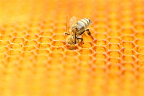 Neonicotinoids Scientists Find Pesticide Residue In 75 Percent Of Honey