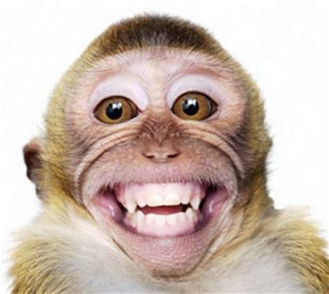 Sale Komik K2 Kill Me Me 1 4 Tamat Di 5 You animals zoo park smiling monkey pictures baby monkey pictures