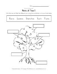 free printable maria montessori simple quiz pdf http label parts of a tree parts tree school pinterest