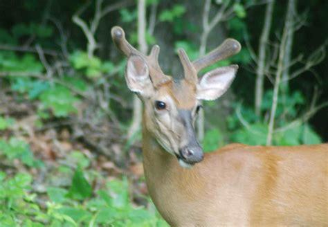 deer racks photos new calendar template site