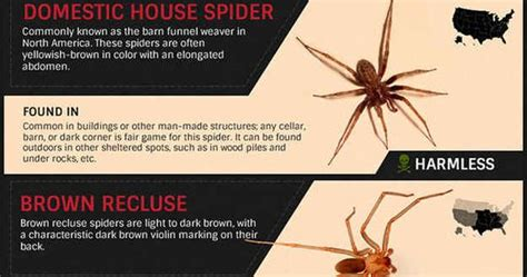 8 Ways To Identify Toxic by Community Post How To Identify Common Poisonous Spiders