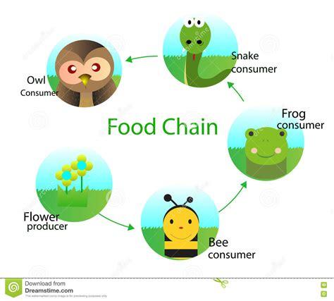 cadenas alimenticias en ingles cadena alimentaria ilustraci 243 n del vector ilustraci 243 n de