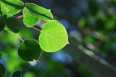 how to identify fruit trees by leaf experiment archive growing with science