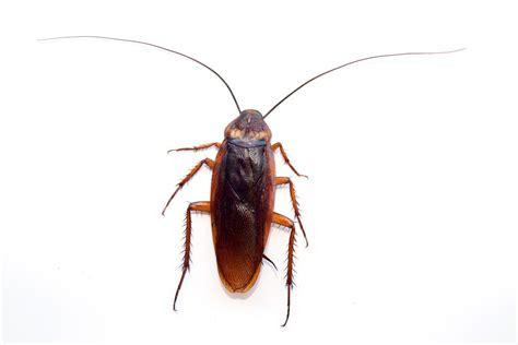 cockroach exterminator berlin conway  hampshire