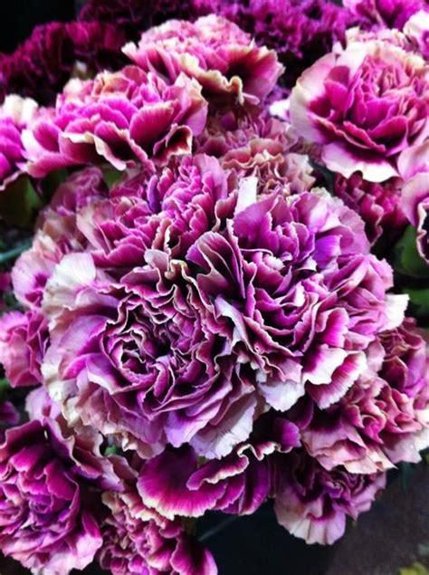 58 best plum purple lavender flowers images on pinterest lavender flowers purple flowers and