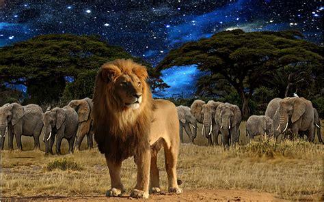 fotos animales fondo de pantalla descargar la imagen en tel 233 fono animales leones gratis