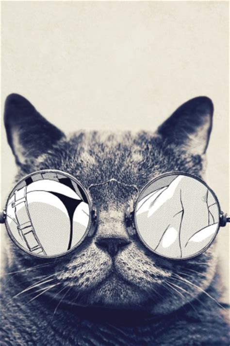 iphone wallpaper cat glasses 320x480 round glasses cute cat iphone 3g wallpaper