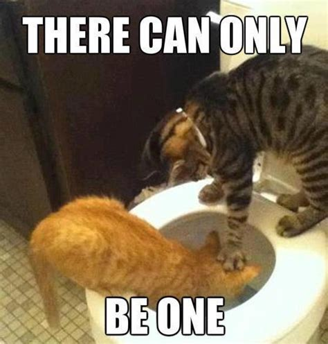 There Can Only Be One Meme - funny cats there can only be one humour spot