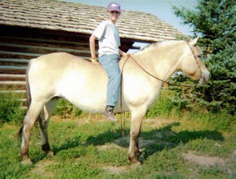 fjord accent accent ranch appaloosa horses for sale quarter horses