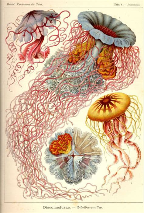 tattoo printer paper staples 25 best ideas about jellyfish drawing on pinterest