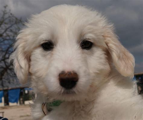 can dogs eat doritos translating berlin
