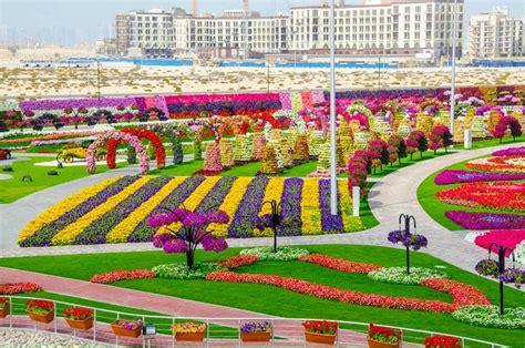 Dubai Miracle Garden World Biggest Flower Garden Largest Flower Garden In The World