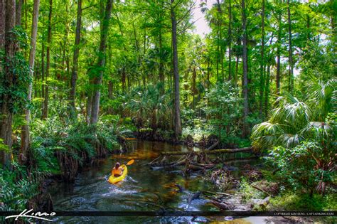 Records Palm County Florida Kayaking The Loxahatchee River Palm County Florida
