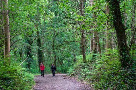 camino de santiago tours camino de santiago walking hiking tours portugal spain