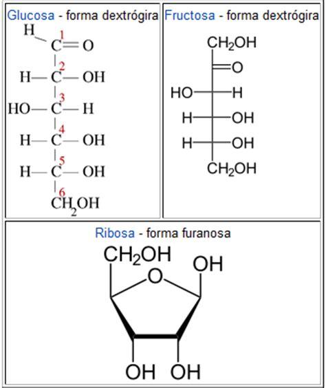 o que significa carbohydrates biologia gl 250 cido