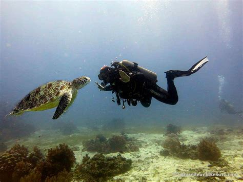 dive packages bohol scuba diving packages alona panglao island bohol