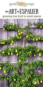 When Is The Best Time To Prune Fruit Trees - the art of espalier growing fruit trees in small spaces garden therapy