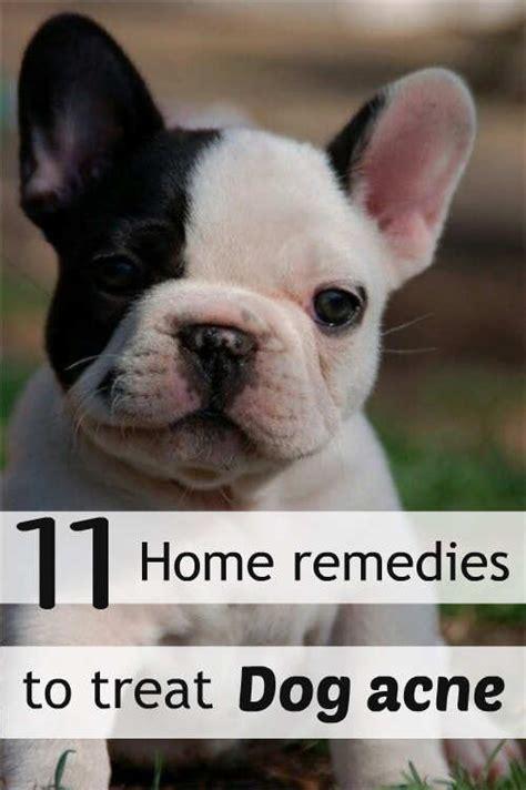 pug skin problems home remedies 11 home remedies to treat acne feminiyafeminiya