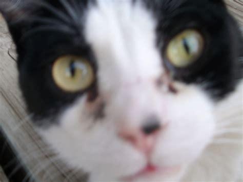 weepy eye my 3 yr cat has always had weepy it is a black slime