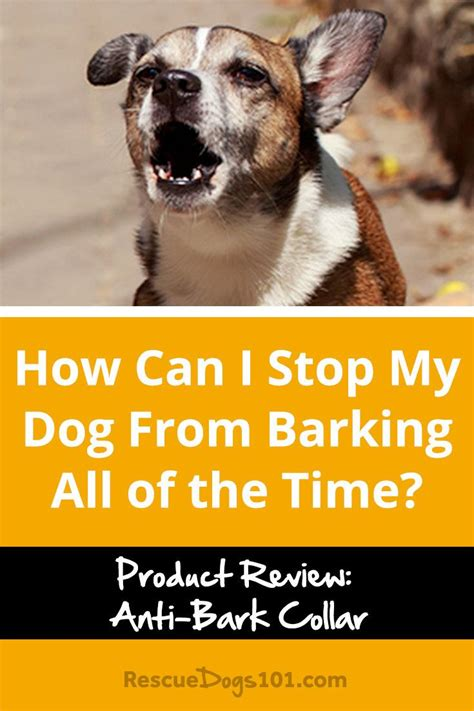 how i stopped my dog from barking at the tv puppy leaks how can i stop my dog from barking all of the time