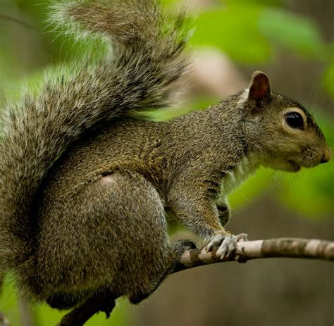 how to hunt squirrels in your backyard how to hunt squirrels in your backyard 28 images 100