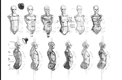 anatomy reference character design pinterest