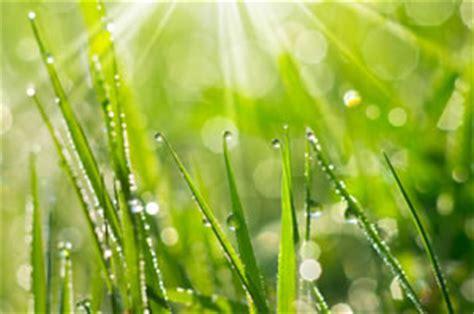 Pilze Im Garten Hund by Rasenprobleme Unkraut Wie Klee Moos Und Pilze Im Rasen