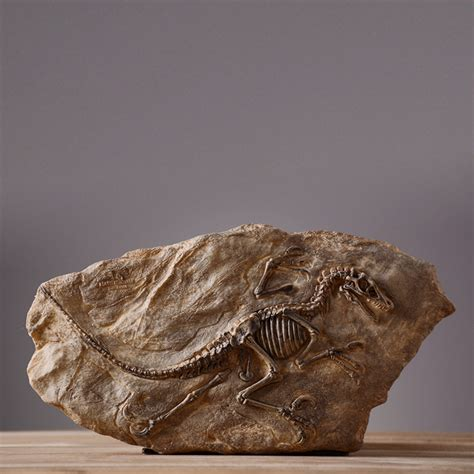 dinosaur fossils museum promotion shop for promotional