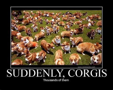 Suddenly Meme - world of warcraft what if corgis unleashed caer