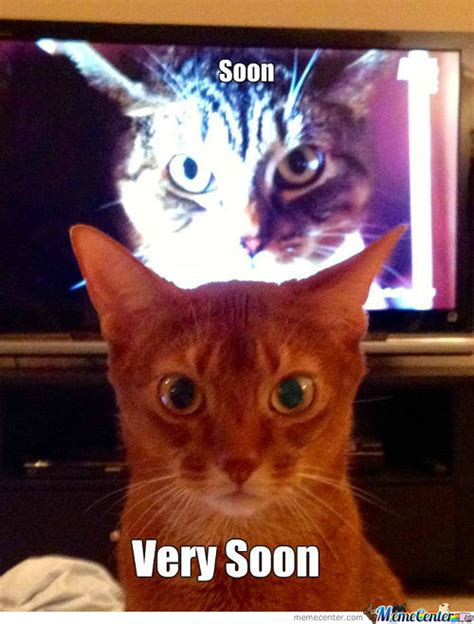Soon Cat Meme - cats soon funny scary memes best collection of funny cats soon funny scary pictures