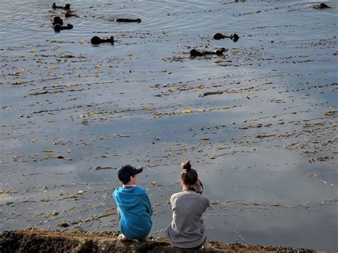 morro bay boat tours 6 ways to see otters in morro bay tips for family trips
