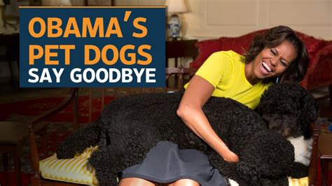dogs in the white house bo and sunny the obama dogs say goodbye to the white house youtube