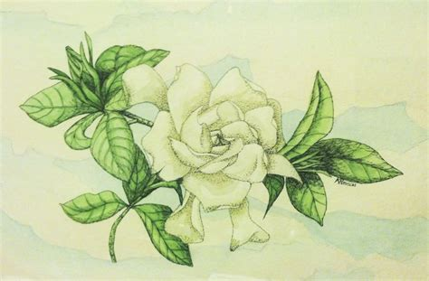 gardenia flower tattoo gardenias tattoos